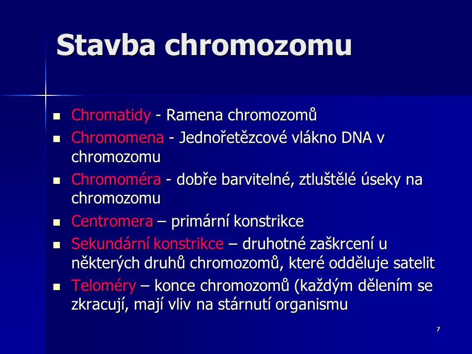 Stavba chromozomu Chromatidy - Ramena chromozomů