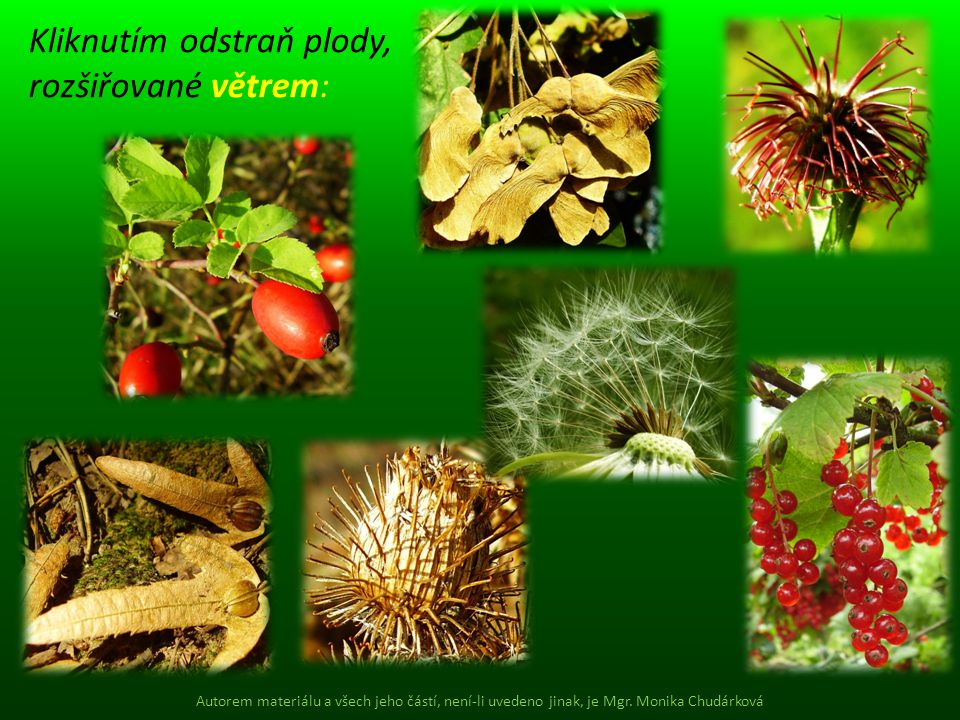 Kliknutím odstraň plody, rozšiřované větrem: