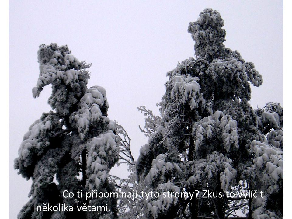 Co ti připomínají tyto stromy Zkus to vylíčit několika větami.