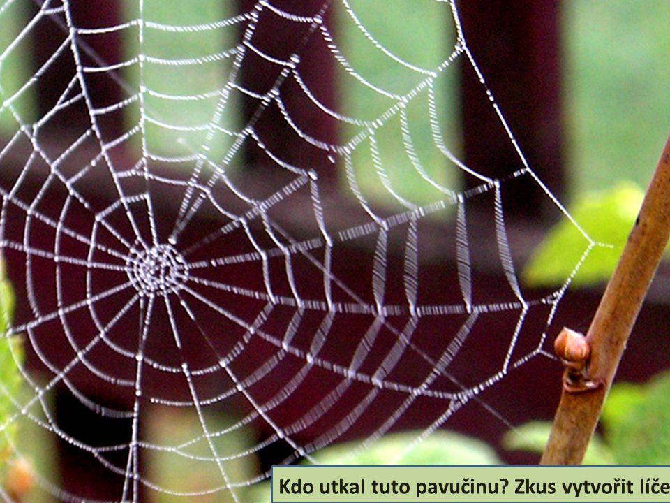 Kdo utkal tuto pavučinu Zkus vytvořit líčení.