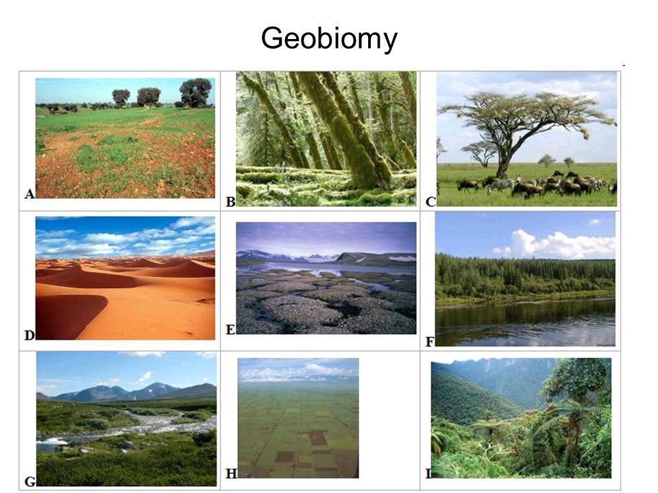 Geobiomy