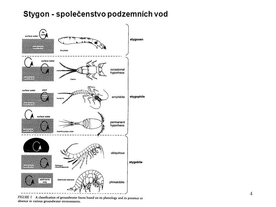 Stygon - společenstvo podzemních vod