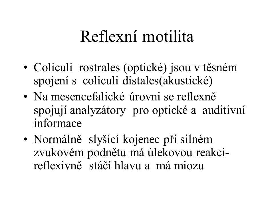 Reflexní motilita Coliculi rostrales (optické) jsou v těsném spojení s coliculi distales(akustické)