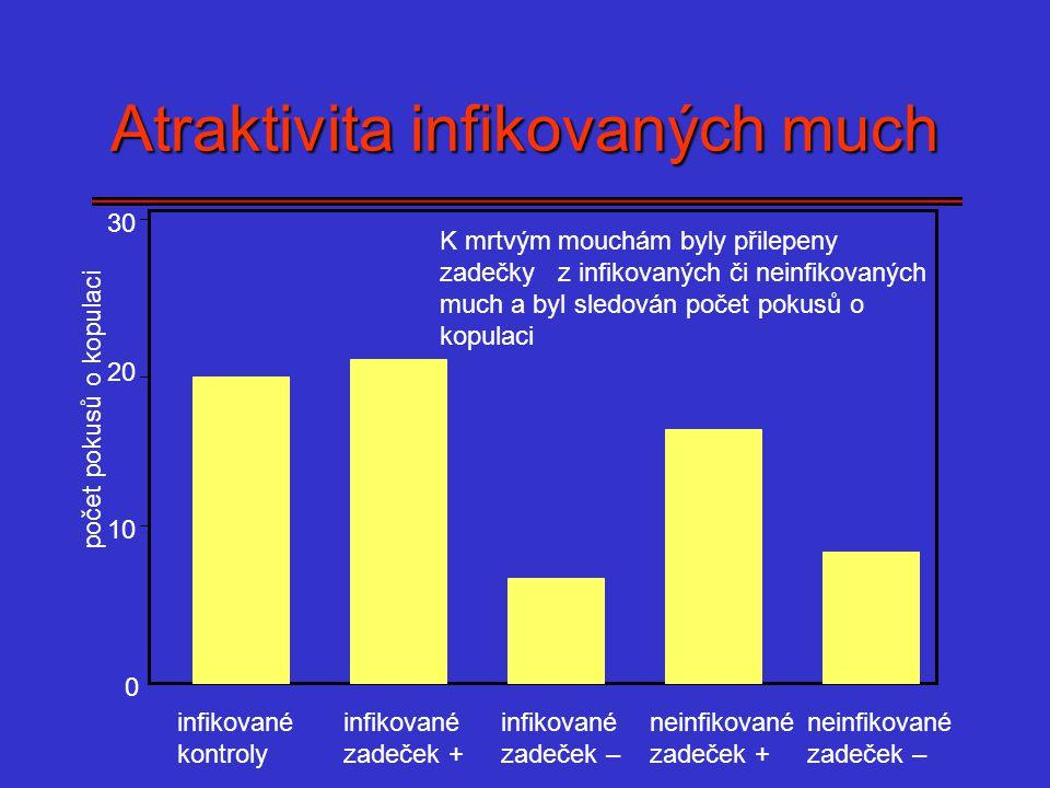 Atraktivita infikovaných much