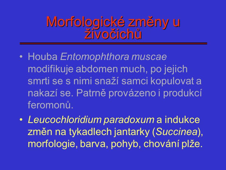 Morfologické změny u živočichů