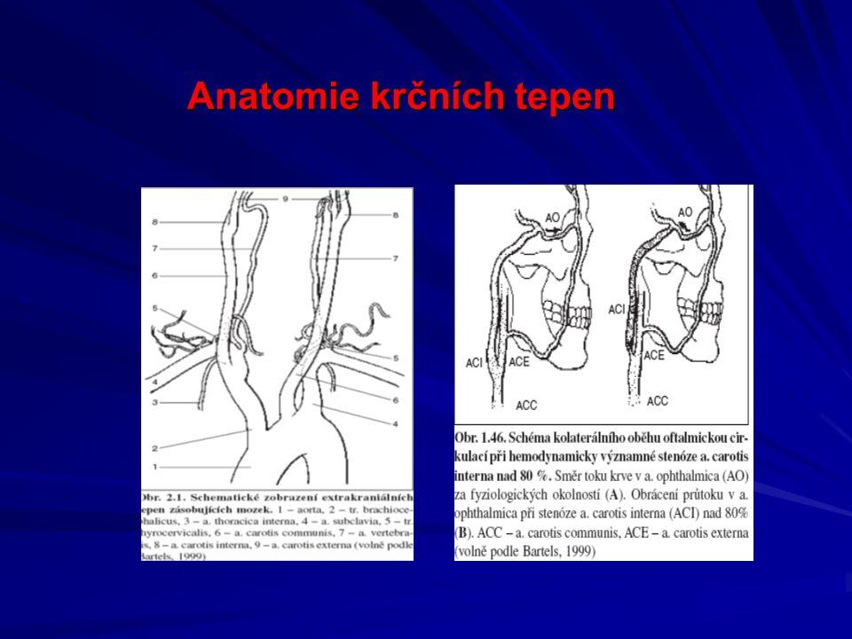 Anatomie krčních tepen