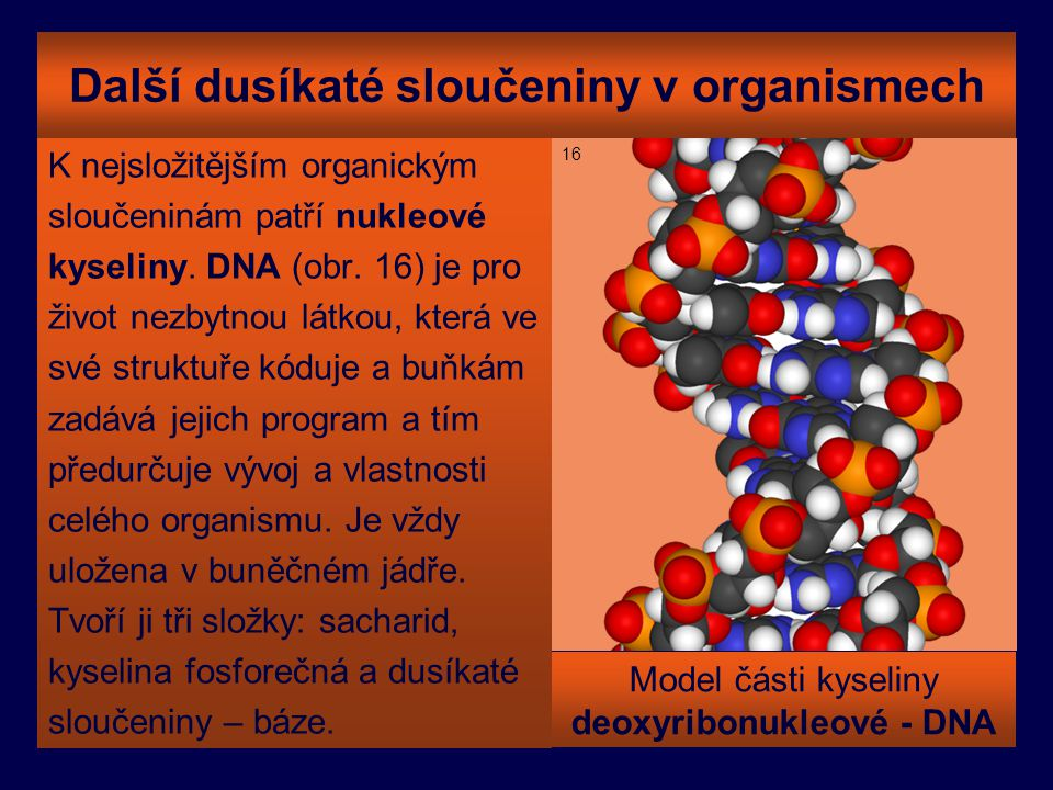 Další dusíkaté sloučeniny v organismech
