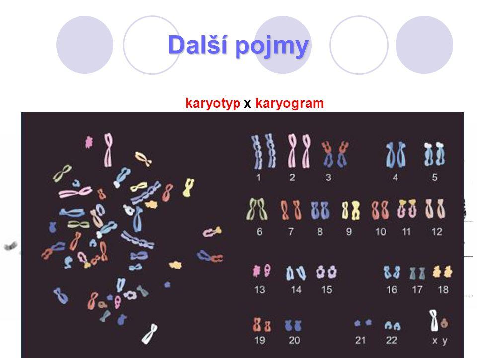Další pojmy karyotyp x karyogram