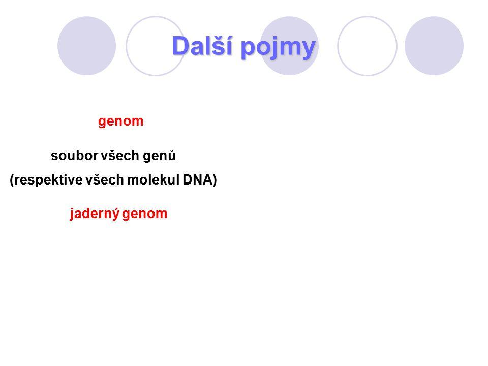 (respektive všech molekul DNA) (respektive všech molekul DNA)