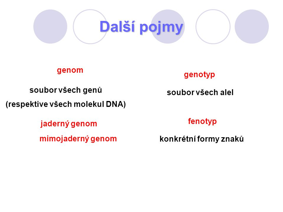 (respektive všech molekul DNA)