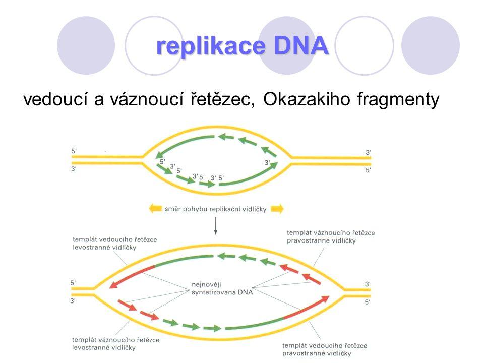 replikace DNA vedoucí a váznoucí řetězec, Okazakiho fragmenty