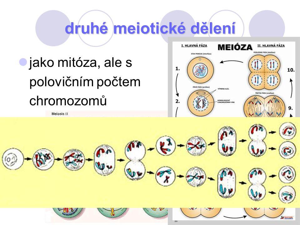 druhé meiotické dělení