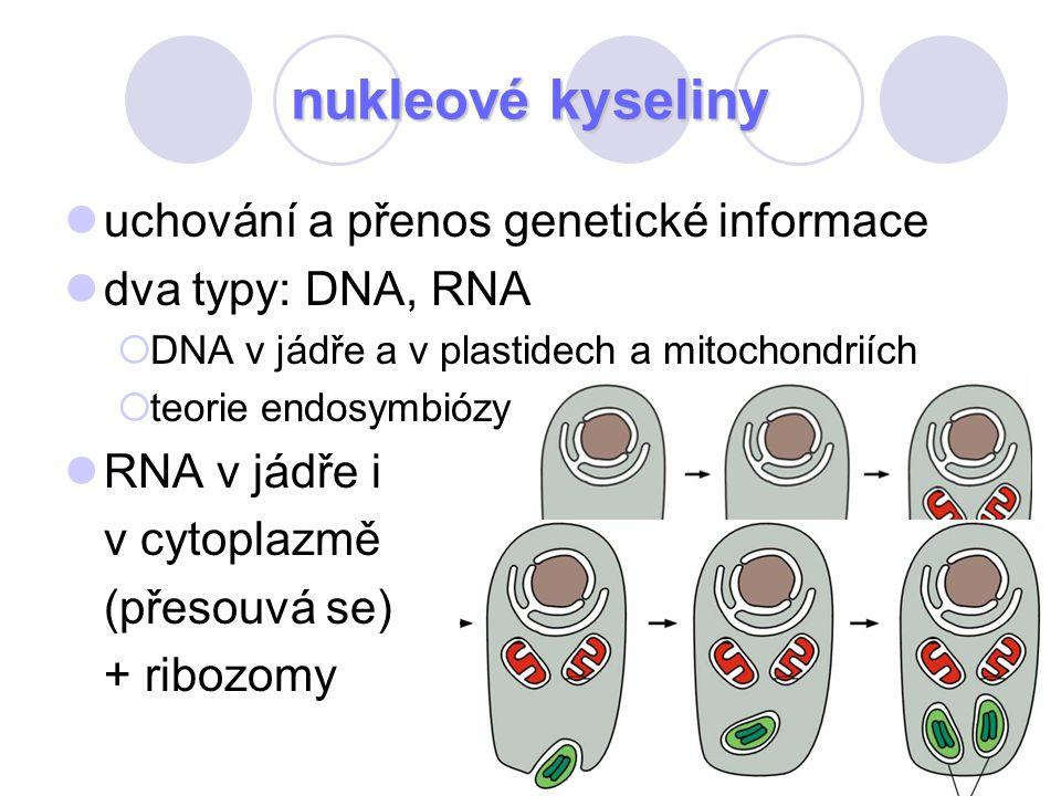 nukleové kyseliny uchování a přenos genetické informace