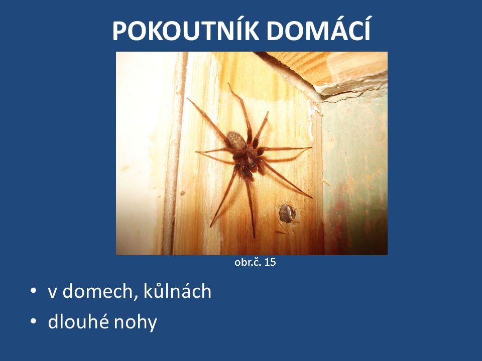 POKOUTNÍK DOMÁCÍ obr.č. 15 v domech, kůlnách dlouhé nohy