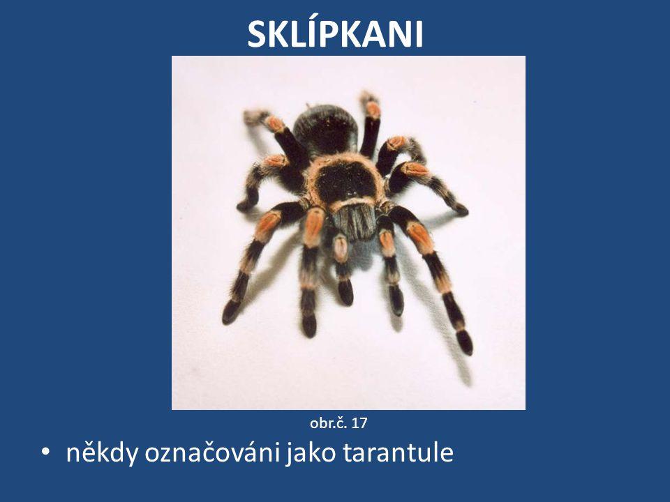 SKLÍPKANI obr.č. 17 někdy označováni jako tarantule