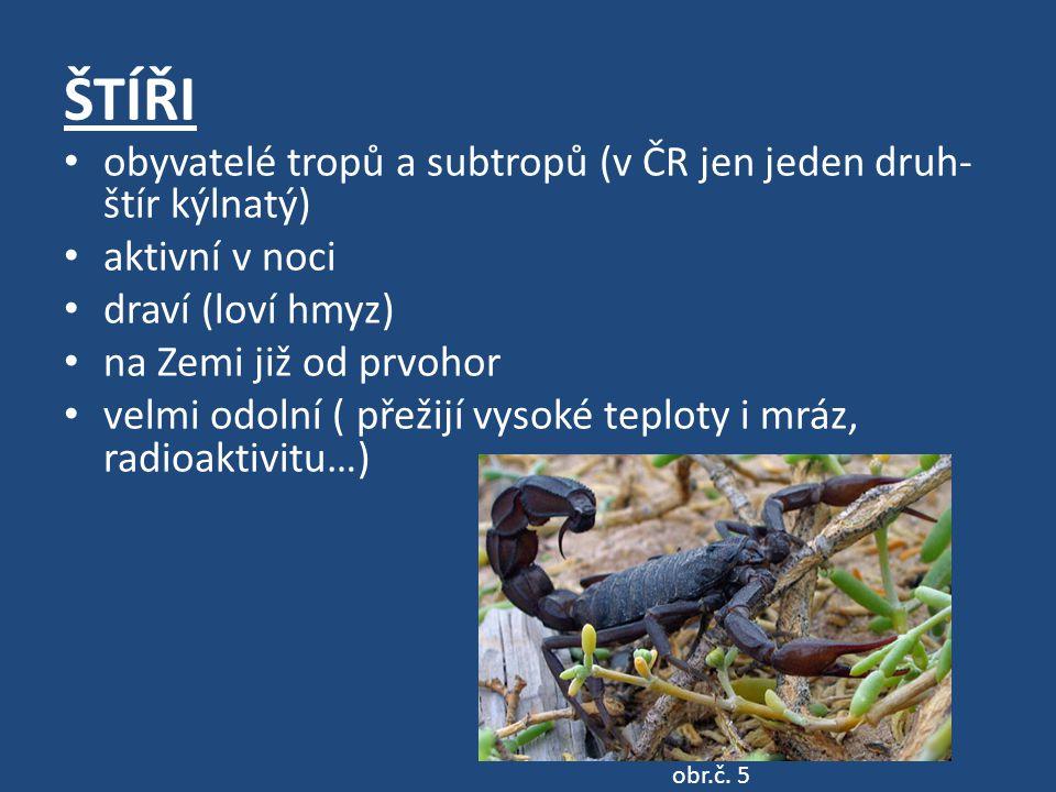 ŠTÍŘI obyvatelé tropů a subtropů (v ČR jen jeden druh-štír kýlnatý)