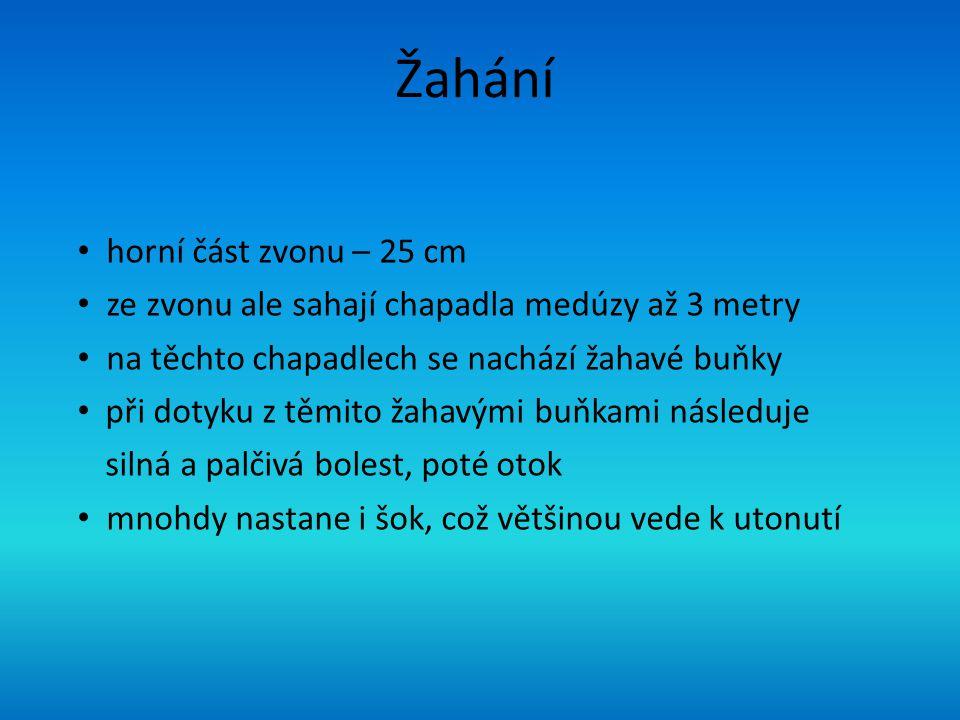 Žahání horní část zvonu – 25 cm