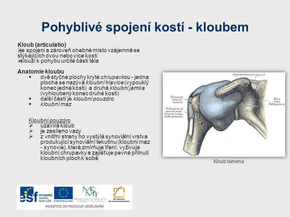 Pohyblivé spojení kostí - kloubem