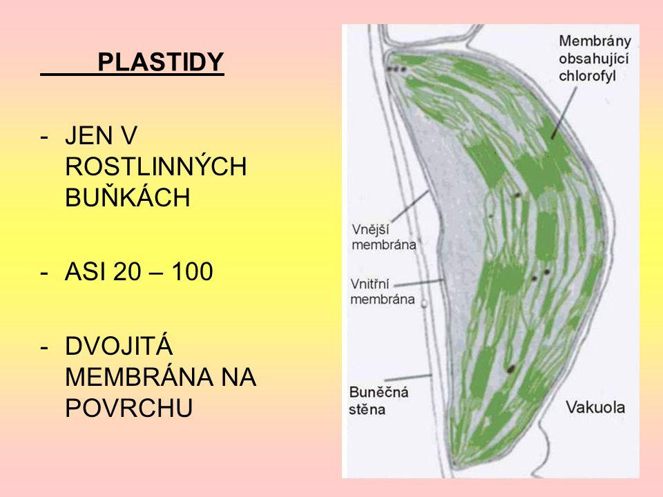 PLASTIDY JEN V ROSTLINNÝCH BUŇKÁCH ASI 20 – 100 DVOJITÁ MEMBRÁNA NA POVRCHU