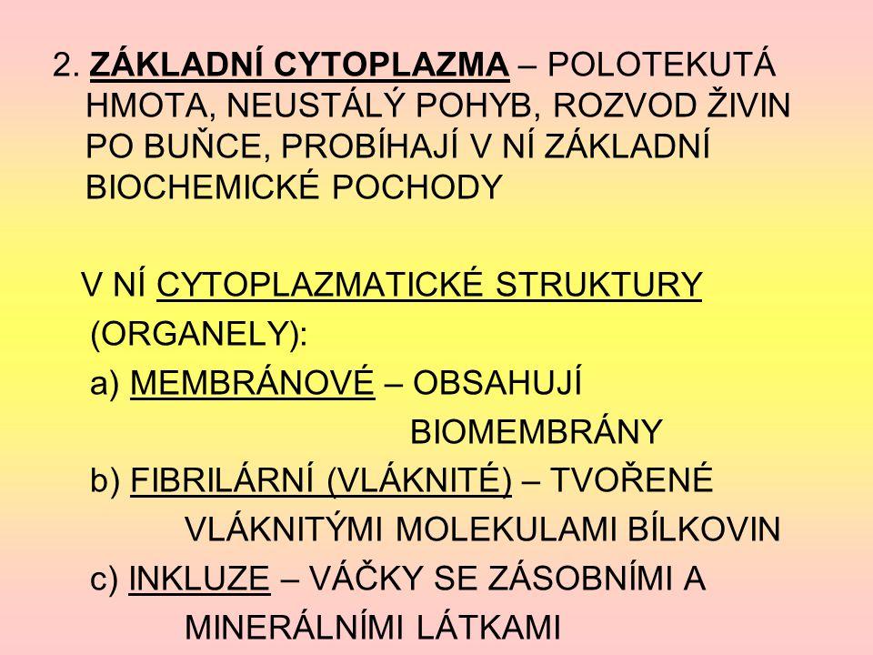2. ZÁKLADNÍ CYTOPLAZMA – POLOTEKUTÁ HMOTA, NEUSTÁLÝ POHYB, ROZVOD ŽIVIN PO BUŇCE, PROBÍHAJÍ V NÍ ZÁKLADNÍ BIOCHEMICKÉ POCHODY