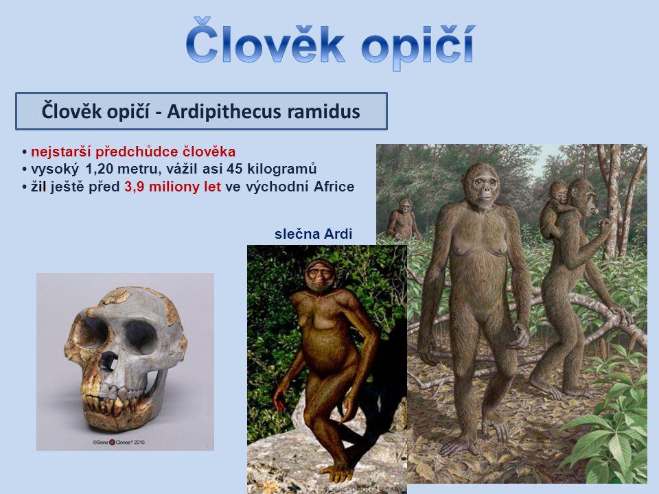 Člověk opičí - Ardipithecus ramidus