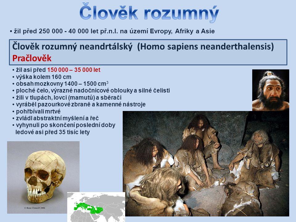 Člověk rozumný • žil před 250 000 - 40 000 let př.n.l. na území Evropy, Afriky a Asie.