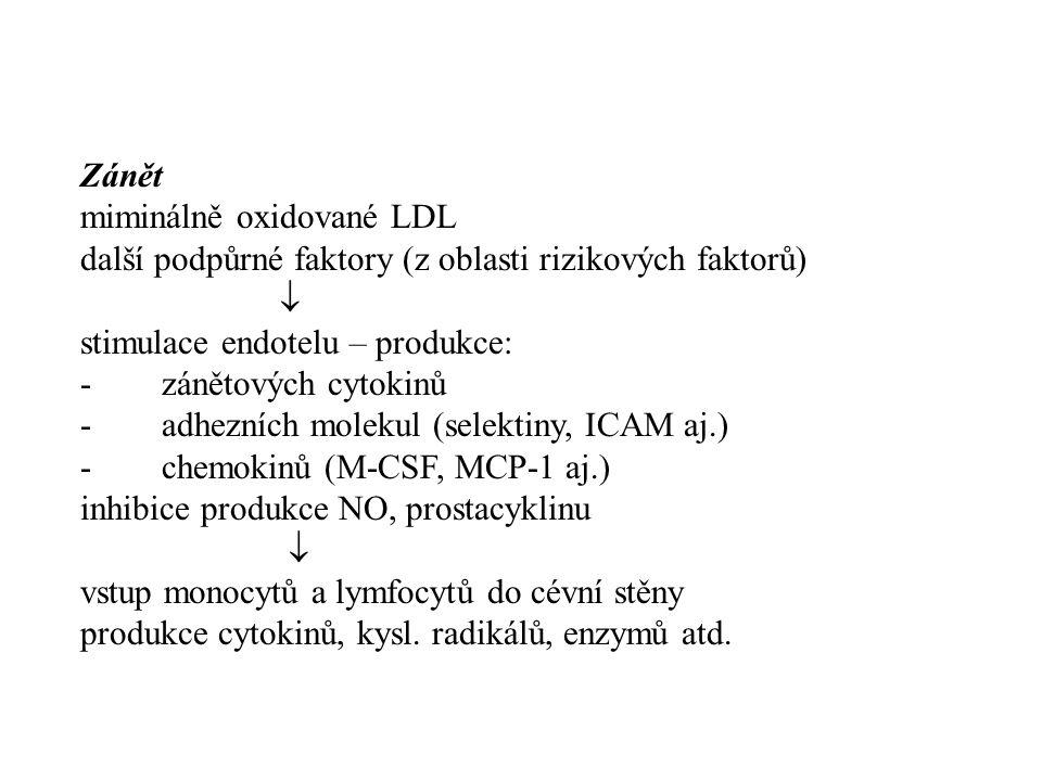 Zánět miminálně oxidované LDL. další podpůrné faktory (z oblasti rizikových faktorů)  stimulace endotelu – produkce: