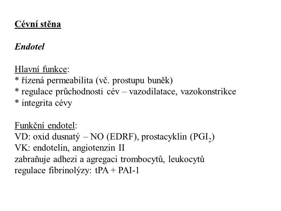 Cévní stěna Endotel. Hlavní funkce: * řízená permeabilita (vč. prostupu buněk) * regulace průchodnosti cév – vazodilatace, vazokonstrikce.