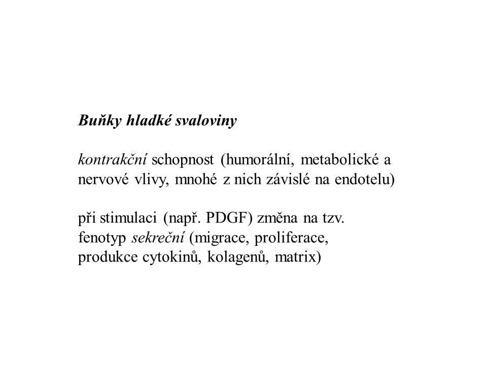 Buňky hladké svaloviny. kontrakční schopnost (humorální, metabolické a nervové vlivy, mnohé z nich závislé na endotelu)