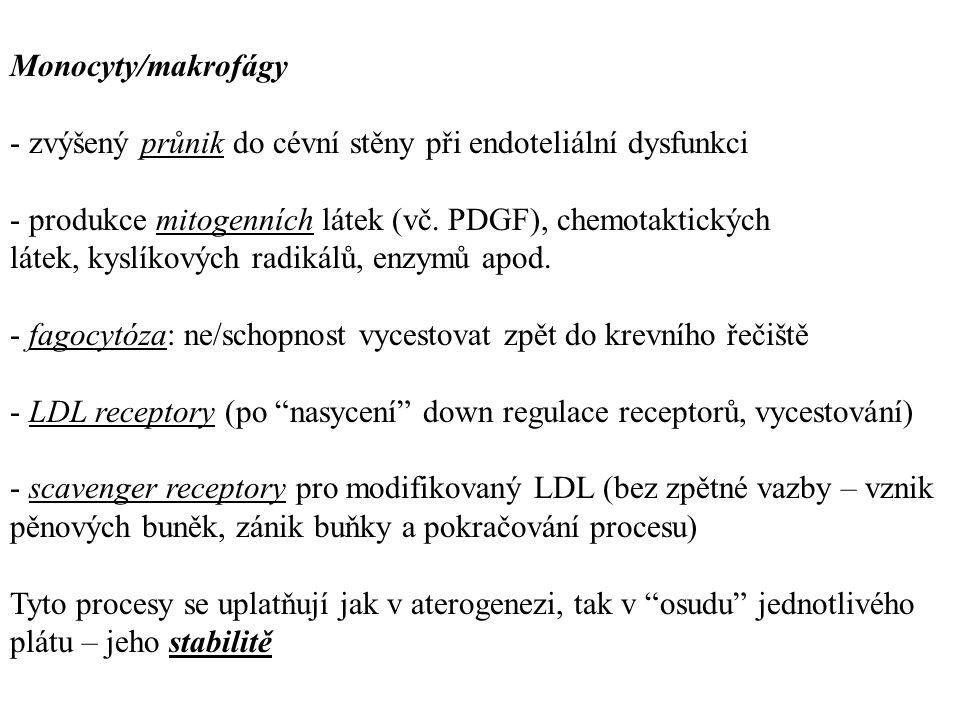 Monocyty/makrofágy - zvýšený průnik do cévní stěny při endoteliální dysfunkci.
