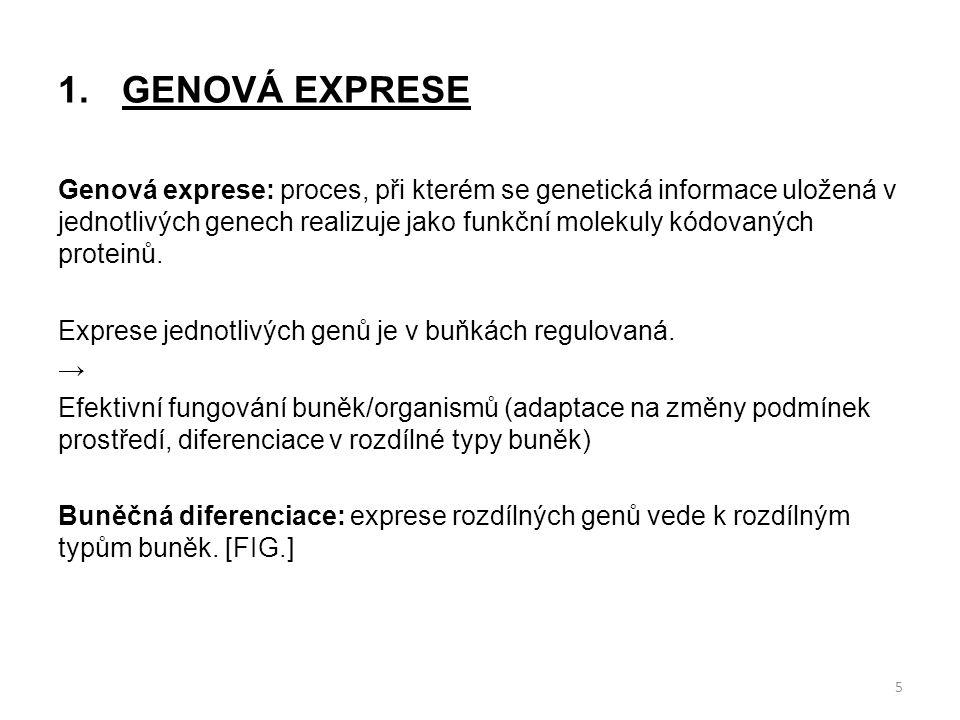 GENOVÁ EXPRESE