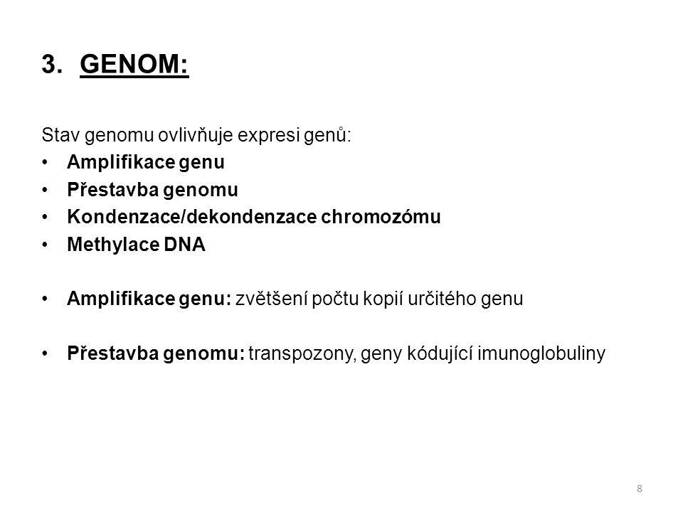 GENOM: Stav genomu ovlivňuje expresi genů: Amplifikace genu
