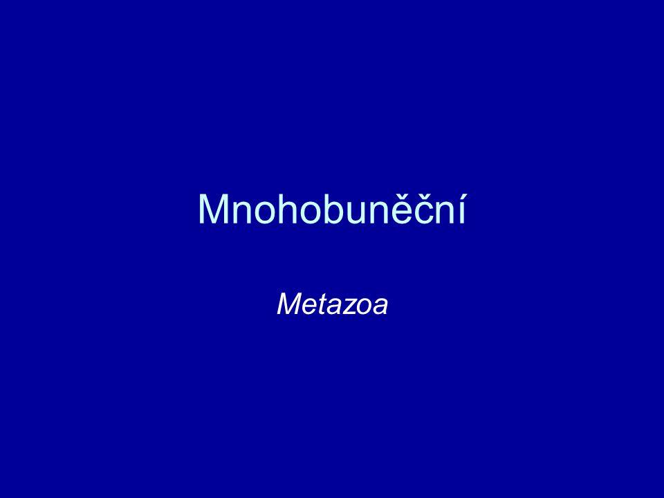 Mnohobuněční Metazoa