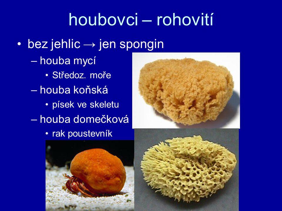 houbovci – rohovití bez jehlic → jen spongin houba mycí houba koňská