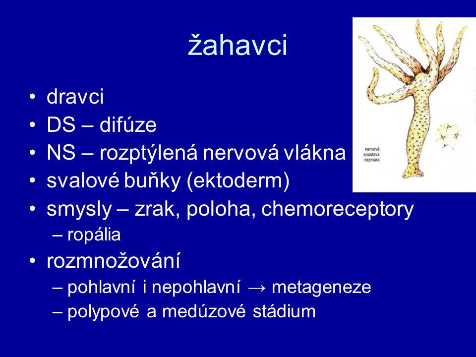 žahavci dravci DS – difúze NS – rozptýlená nervová vlákna