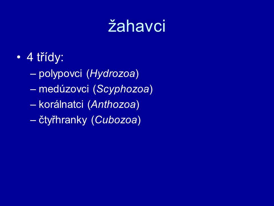 žahavci 4 třídy: polypovci (Hydrozoa) medúzovci (Scyphozoa)