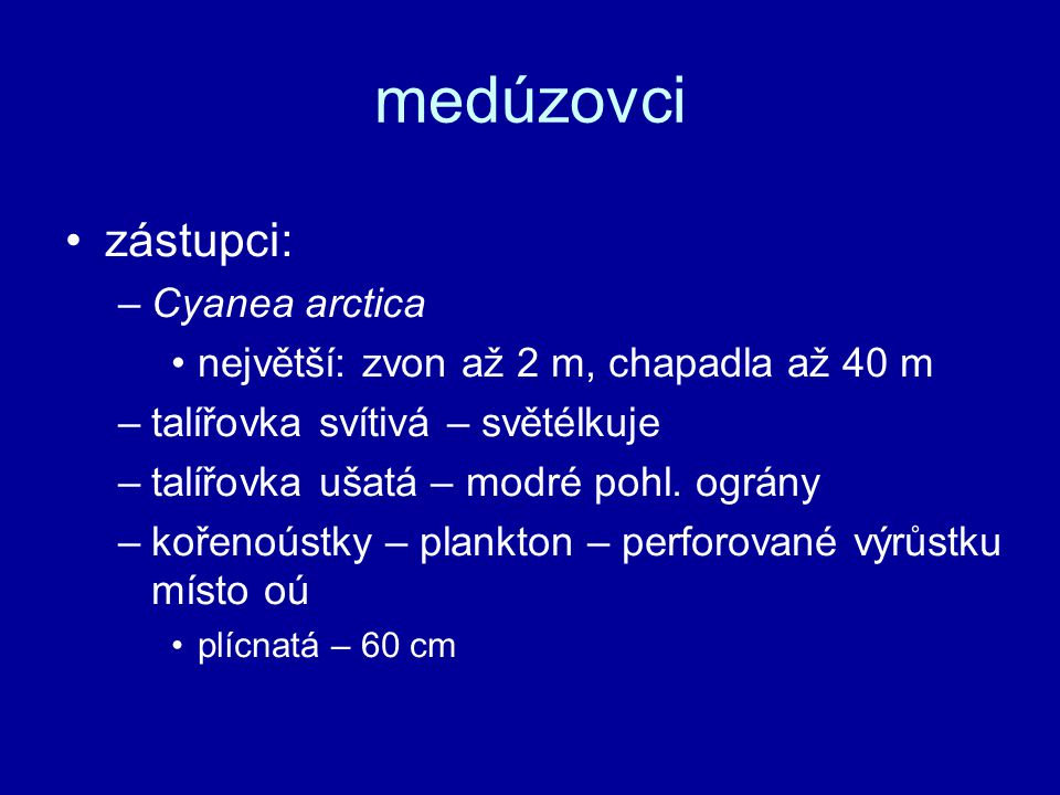 medúzovci zástupci: Cyanea arctica