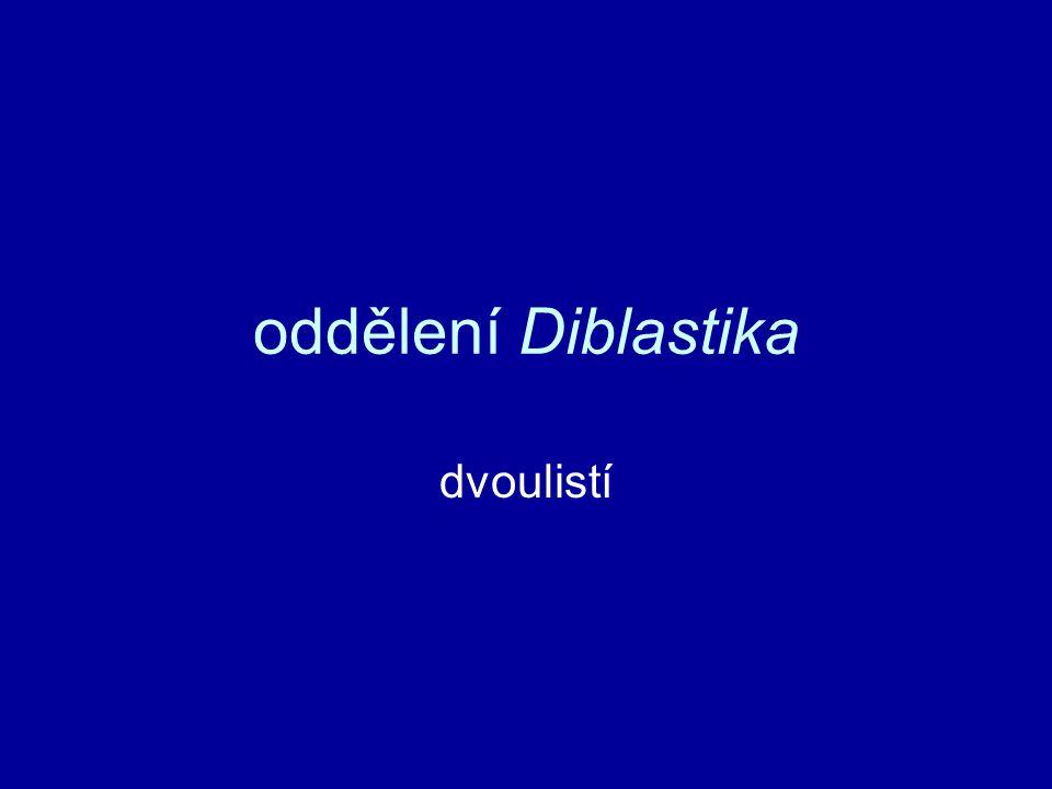 oddělení Diblastika dvoulistí