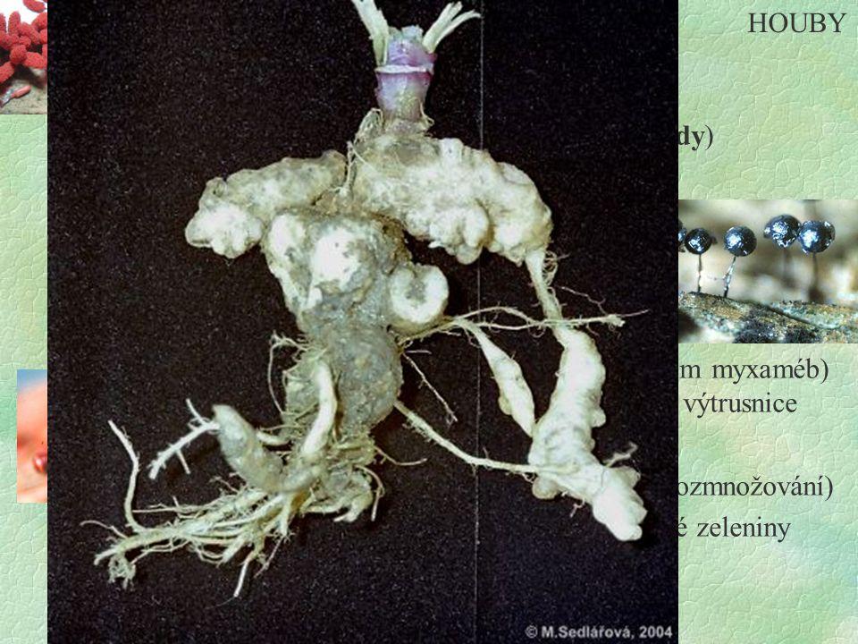 HOUBY Hlenky. jednobuněčné - pohyb pomocí - bičíků (myxomonády) - panožek (myxaméby) pohyblivé výtrusy.