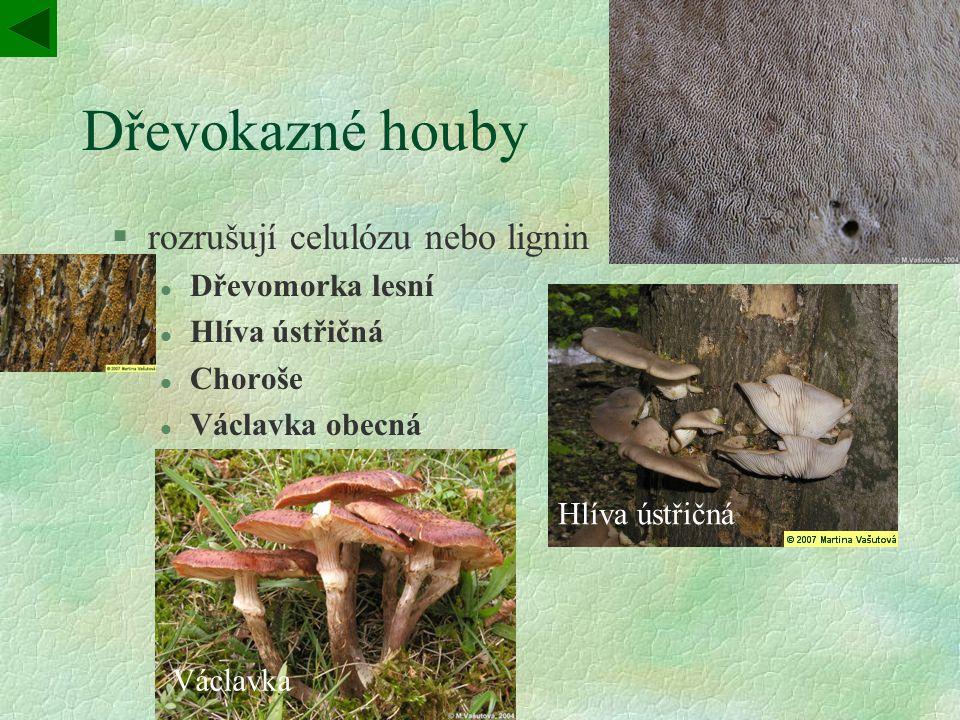 Dřevokazné houby rozrušují celulózu nebo lignin Choroš