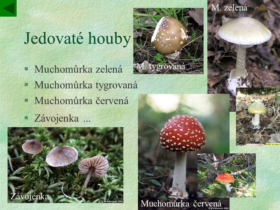 Jedovaté houby Muchomůrka zelená Muchomůrka tygrovaná