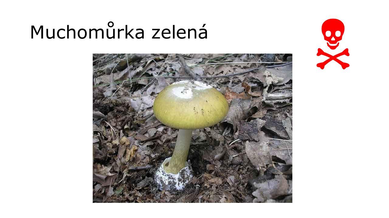  Muchomůrka zelená