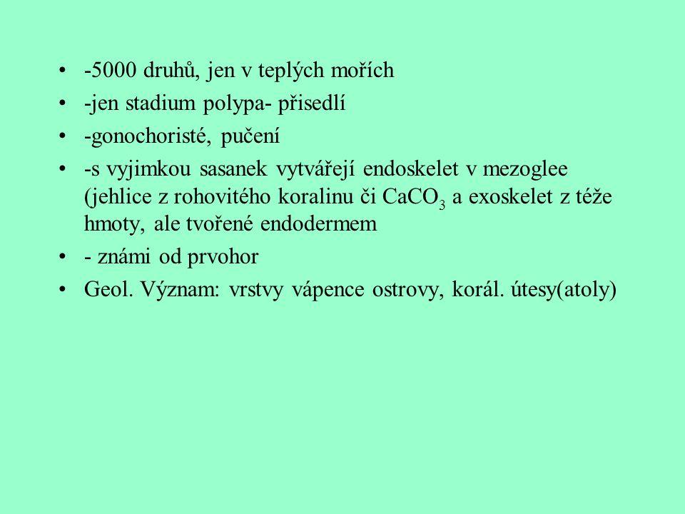 -5000 druhů, jen v teplých mořích