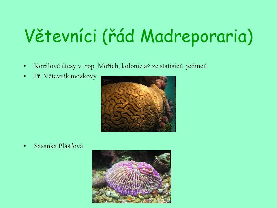 Větevníci (řád Madreporaria)