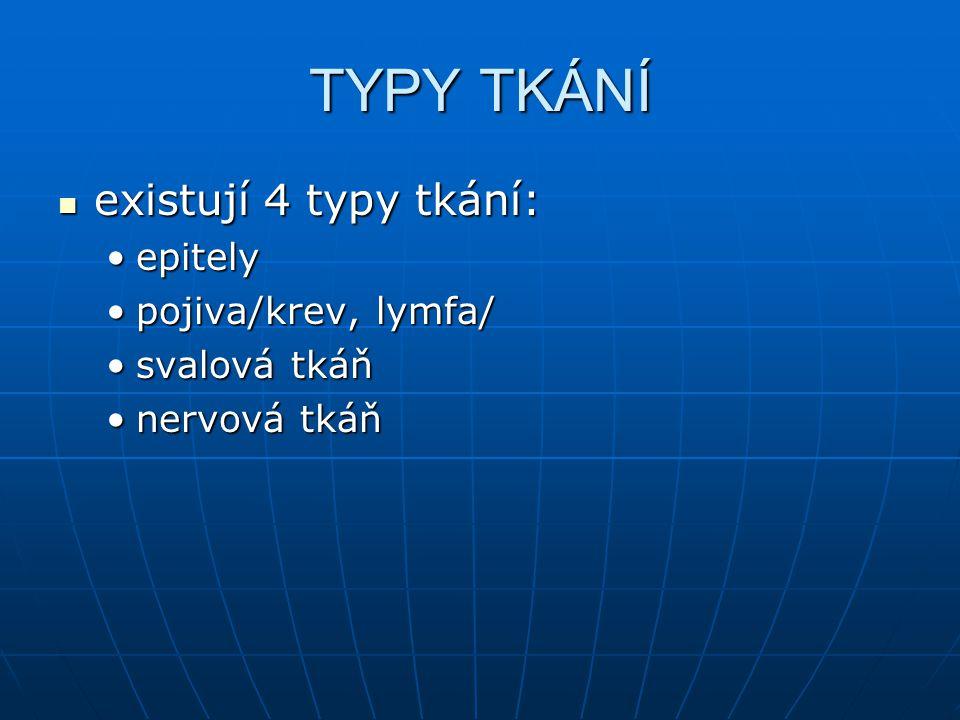 TYPY TKÁNÍ existují 4 typy tkání: epitely pojiva/krev, lymfa/