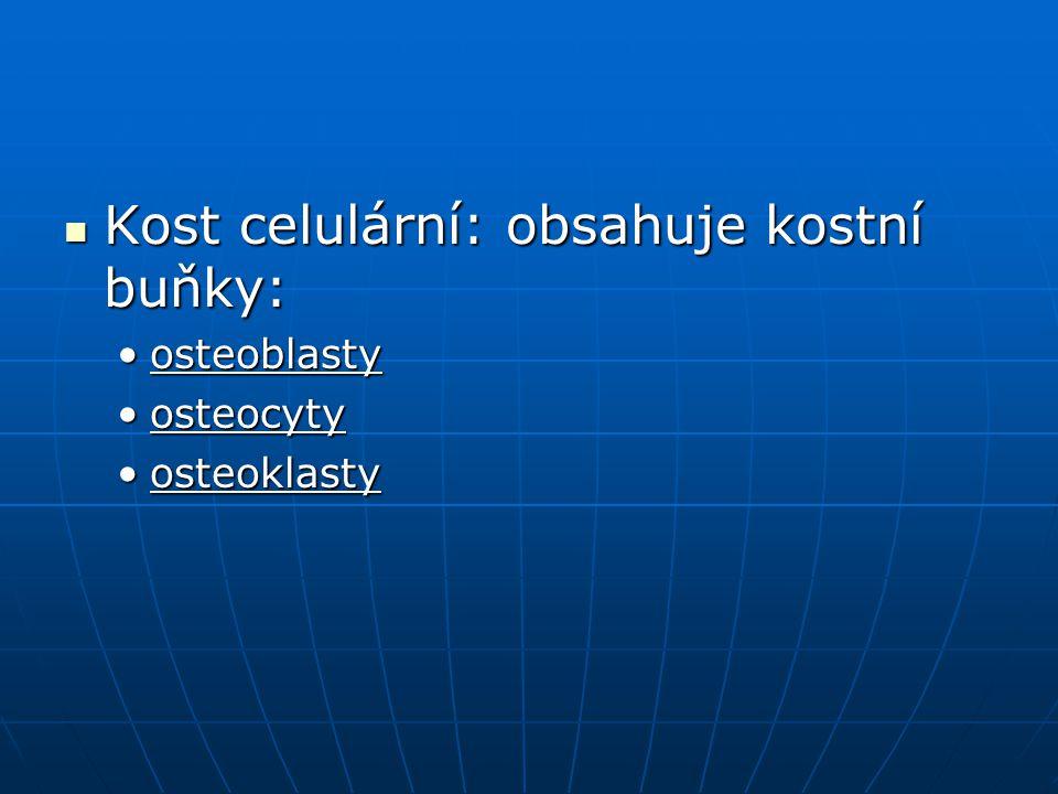 Kost celulární: obsahuje kostní buňky: