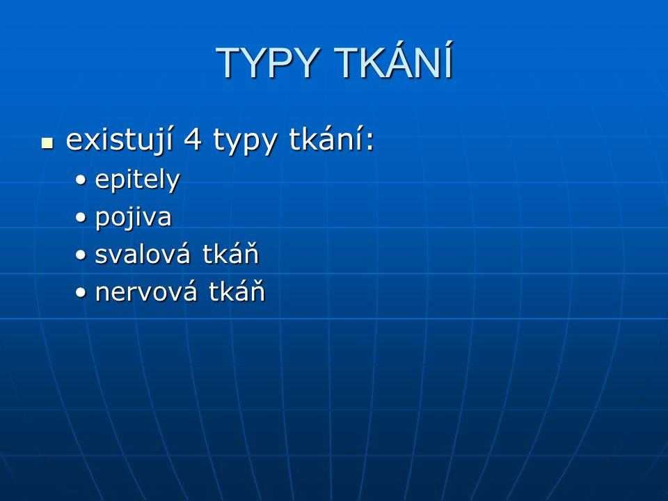 TYPY TKÁNÍ existují 4 typy tkání: epitely pojiva svalová tkáň