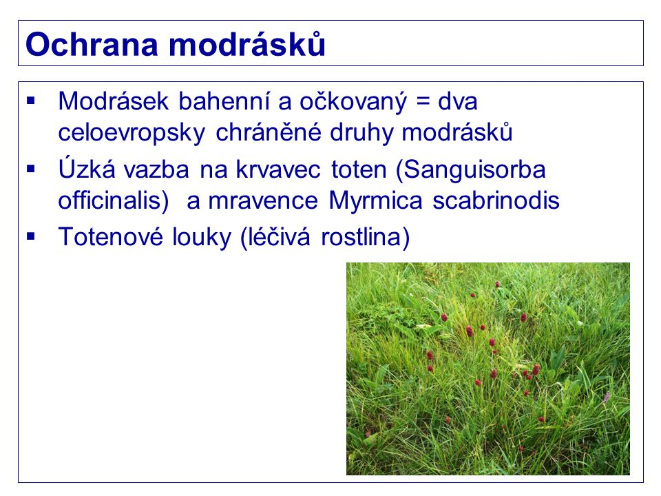 Ochrana modrásků Modrásek bahenní a očkovaný = dva celoevropsky chráněné druhy modrásků.