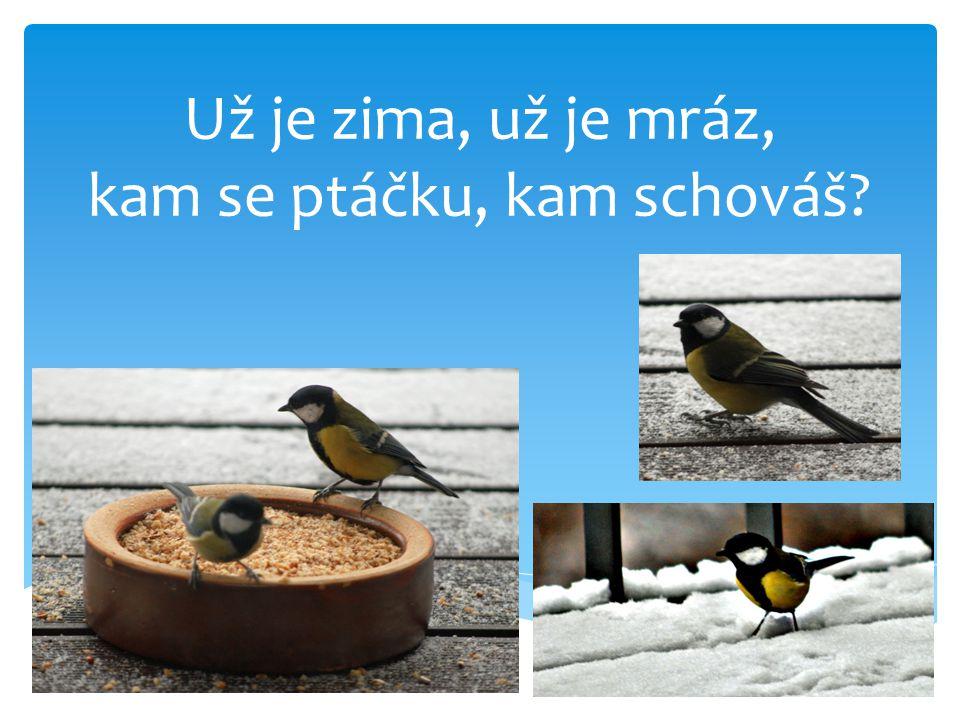 Už je zima, už je mráz, kam se ptáčku, kam schováš