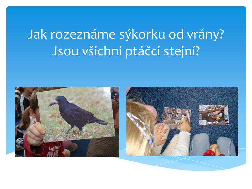 Jak rozeznáme sýkorku od vrány Jsou všichni ptáčci stejní